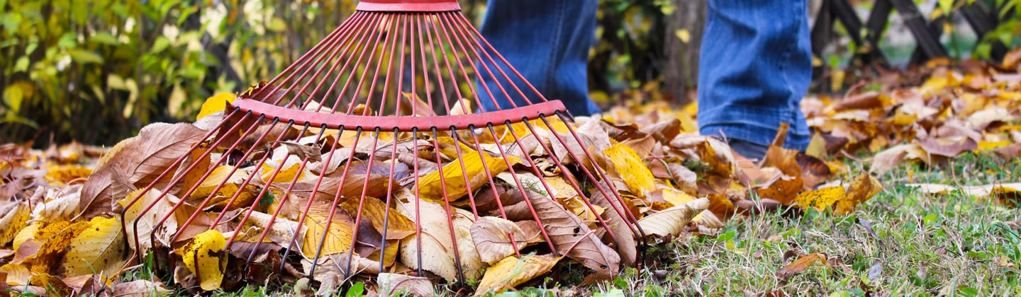 Home owner on lawn gathering yard waste